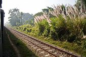 stock photo of bangladesh  - this is a photo pf a railway in between Dhaka and Chittagong in Bangladesh - JPG