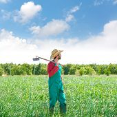 pic of orchard  - Farmer man with hoe looking at his orchard field with hat - JPG