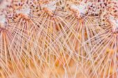 stock photo of thorns  - Macro of insect hair and thorns gold for the background is out of focus blur