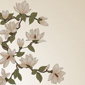 picture of magnolia  - Vector background with magnolia flowers on branch - JPG