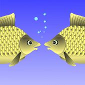 pic of freshwater fish  - Freshwater Fishes Swimming in the Blue Water - JPG