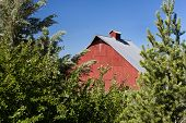 image of red barn  - Red barn framed by trees at the arboretum in Moscow Idaho - JPG