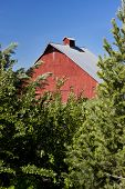 picture of red barn  - Red barn framed by trees at the arboretum in Moscow Idaho - JPG