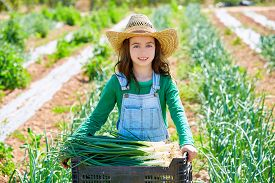 picture of orchard  - Little kid farmer girl in onion harvest at orchard - JPG