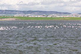 image of larnaca  - Flamingos in Larnaca Salt Lake - Cyprus Island ** Note: Soft Focus at 100%, best at smaller sizes - JPG