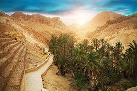 stock photo of sahara desert  - View of mountain oasis Chebika Sahara desert Tunisia Africa - JPG