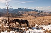 stock photo of beartooth  - A view of the Gallatin National Forest and West Boulder river basin with horses in the foreground near McLeod Montana - JPG