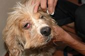 stock photo of animal cruelty  - abuse doggie rescued and being treated in vet against animals cruelty bekind to all creatures - JPG