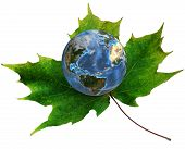 stock photo of planet earth  - A blue planet Earth rests on a green maple leaf - JPG
