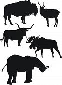 Strong Animals Silhouettes poster