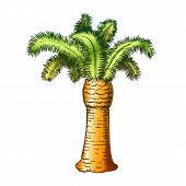 Palm Coastline Tropical Tree Color Vector. Decorative Beautiful Trunk Palm. Paradise Wild Tropics Na poster