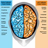 picture of right brain  - IIlustration body part - JPG