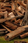 Dry Chopped Firewood Logs In A Pile. A Pile Of Firewood In The Forest. Firewood In A Forest Glade. F poster
