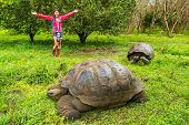 Galapagos Giant Tortoise and happy woman tourist on Santa Cruz Island in Galapagos Islands. Animals, poster