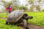 Galapagos Giant Tortoise and woman tourist on Santa Cruz Island in Galapagos Islands. Animals, natur poster