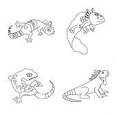Isolated Object Of Wildlife And Nature Icon. Collection Of Wildlife And Exotic Vector Icon For Stock poster