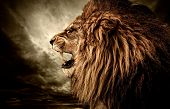 stock photo of leo  - Roaring lion against stormy sky - JPG
