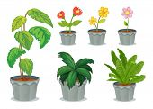 image of six-petaled  - Illustration of six pots with plants on a white background - JPG