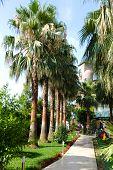image of garden eden  - Alley in a tropical garden with a stone path - JPG