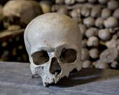 stock photo of catacombs  - Human skulls in the basement crypt - JPG