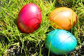 picture of ester  - This is Ester photo with Easter eggs - JPG