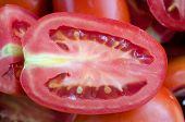 picture of plum tomato  - Close up of a plum tomato cut in half showing the seeds and juicy insides - JPG