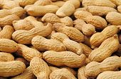 foto of groundnuts  - groundnut background - JPG