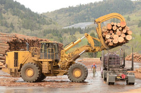 stock photo of logging truck  - A large wheeled front end log loader unloading a log truck at a log yard at a lumber processing mill that specializes in small logs - JPG