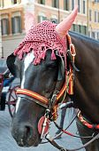 stock photo of workhorses  - Sightseeing Horse in Rome - JPG