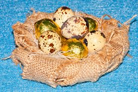 stock photo of homogeneous  - quail eggs in an artificial nest of natural burlap on a homogeneous background - JPG