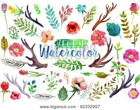 Vector watercolor hand drawn colorful flowers, leaves and horns. The art paint on white background