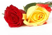 stock photo of yellow rose  - red and yellow valentine day roses close - JPG