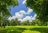 pic of conifers  - Large clearing in the park among the conifers and deciduous trees on the background of the sky with clouds - JPG
