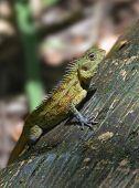 picture of lizard skin  - Tropical lizard sitting on a tree bark - JPG