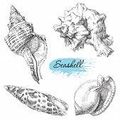 pic of scallop shell  - Beauty set of various sea shells vector - JPG