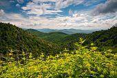 pic of asheville  - Appalachian Mountains Summer Asheville North Carolina Blue Ridge Parkway landscape photography - JPG