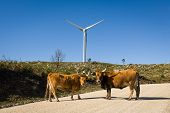 picture of wind-power  - Wind farm. Modern windmills or wind turbines in the countryside landscape. Electricity is powered ecological and considered better for the environment over oil and other fossil fuels. A renewable resource for energy. - JPG