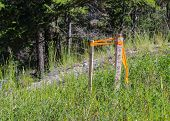picture of grass area  - three wooden sticks marking an area in the grass to not disturb - JPG