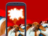 stock photo of basset hound  - Smartphone application and basset hound puppy tired of taking photo of him - JPG