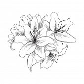 stock photo of lillies  - floral illustration of lilly flowers - JPG