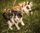 stock photo of baby cat  - small group of baby cats playing in the grass - JPG