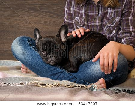 poster of Dog and girl on the bed. Girl and dog look at each other. Legs in jeans, barefoot. Black dog, french bulldog puppy. Ideas concept - Dogs Trust to the person. Comfort, rest with the dog