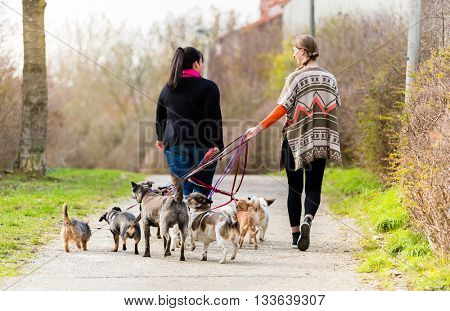 poster of Dog sitters walking their customers