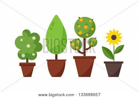 Home bush plant in pot culture on white background and set of indoor home plant and tree in pots. Home pot plant and tree plants with flowers and leaves. Botany gardening flower home plant and tree. poster