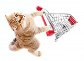 image of cart  - cat with shopping cart top view isolated on white - JPG