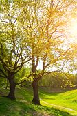Spring Landscape.green Spring Park Trees And Sunset Light Shining Through The Spring Tree Branches.  poster