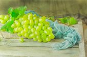 Fresh Green Grapes. Bunch Of Grapes And Vine Leaf poster