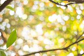 Nature Blurred Light Abstract Background / Natural Outdoors Bokeh Background, Blurred Forest Backgro poster