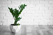 Tropical Plant With Green Leaves Against Brick Wall Indoors poster