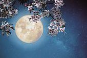 Romantic Night Scene - Beautiful Cherry Blossom (sakura Flowers) In Night Skies With Full Moon.  - R poster